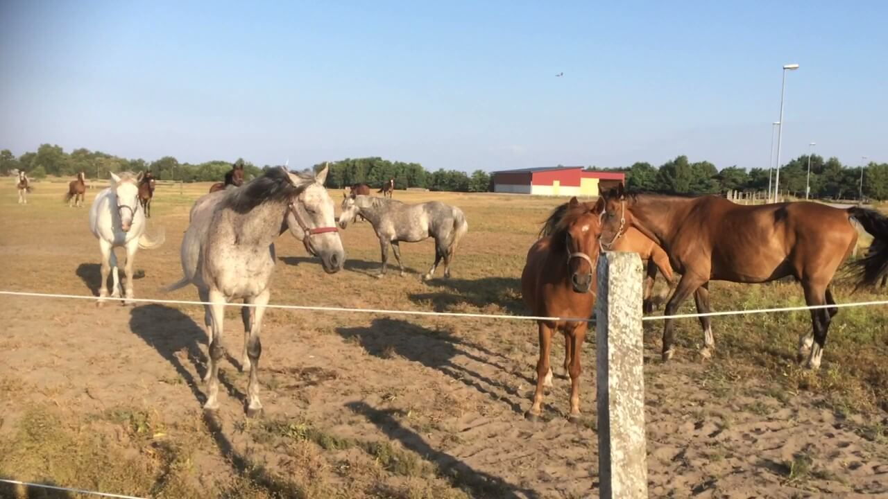 Hästen utvecklar mitt företag